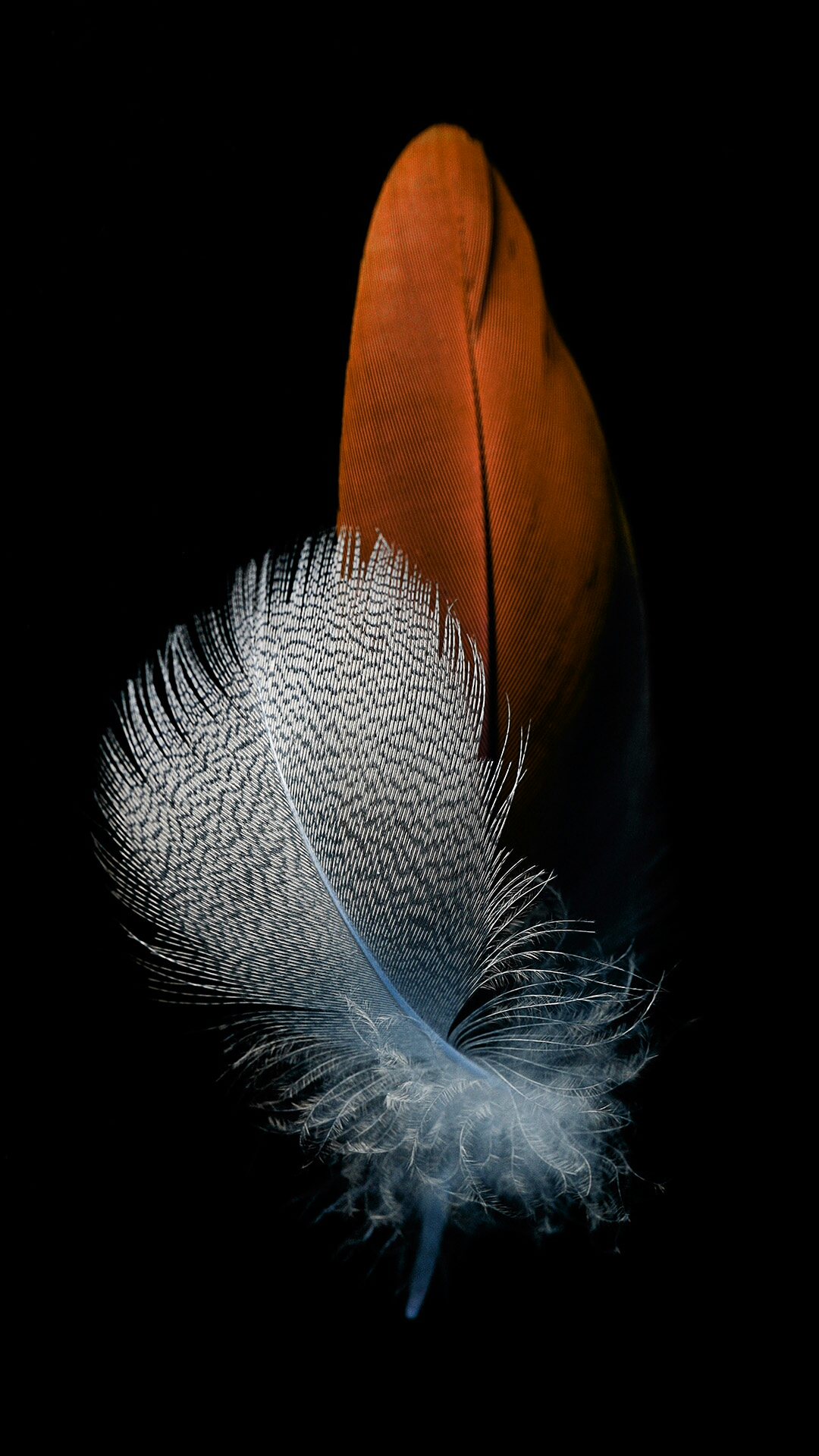 Huawei P8 Lite 2017 Wallpapers: Huawei P8 Lite Feather Wallpapers