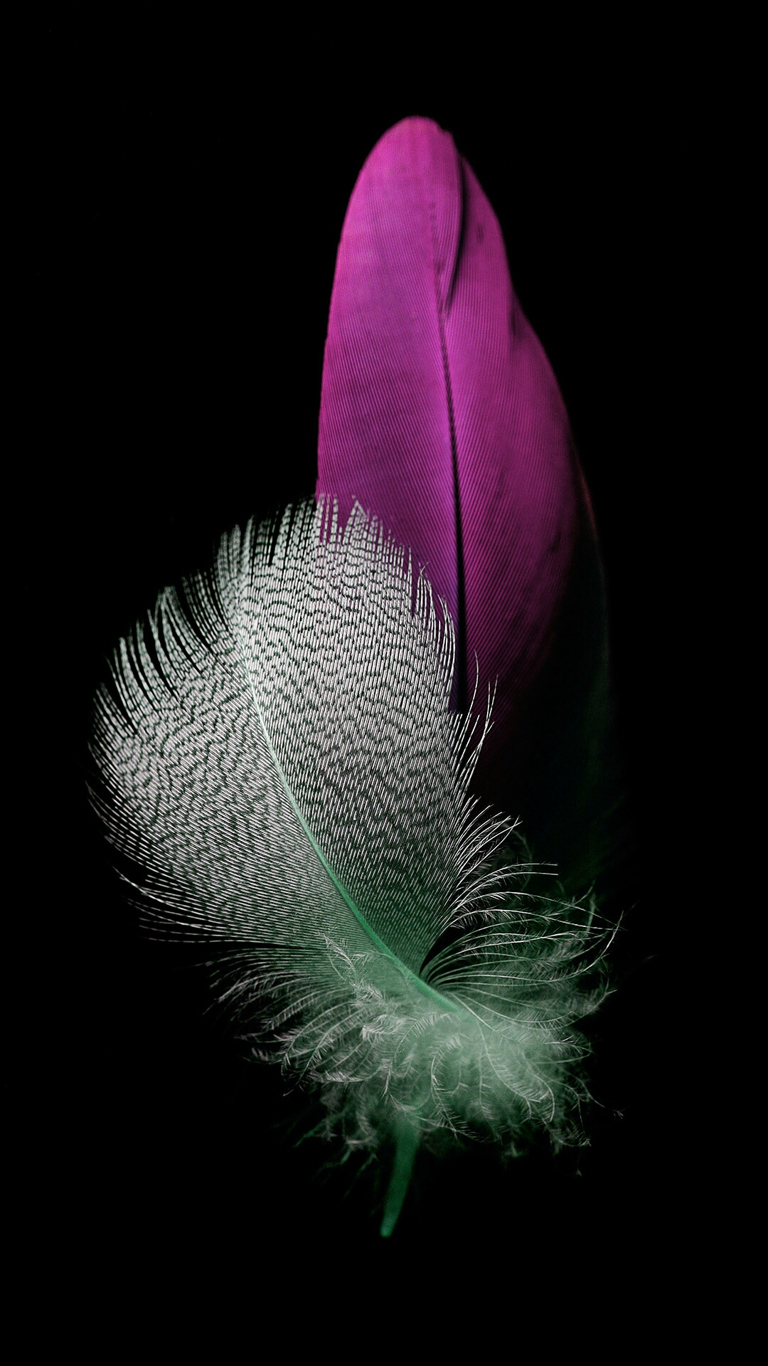 Fantastic Wallpaper Logo Huawei - feather-03  Pictures_174863.jpg